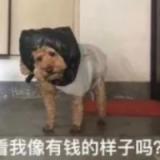 四川羽医医疗管理有限公司.net研发工程师