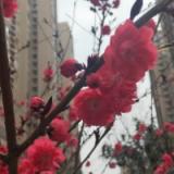 前深圳鸿源软业高级后端工程师