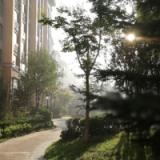 前中国科学院青岛智能产业技术研究院高级后端工程师